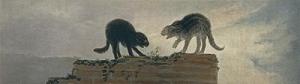 rina-de-gatos